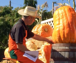 Farmer Mike carving pumpkins at the 2017 Half Moon Bay Pumpkin Festival. Dawn Page / CoastsideSlacking